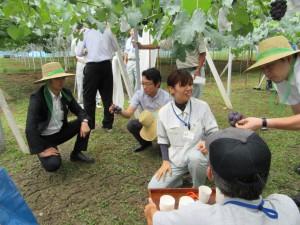 ブドウ栽培(津山)